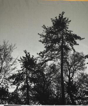 Sorte træer på støvet lys grøn - French Terry -