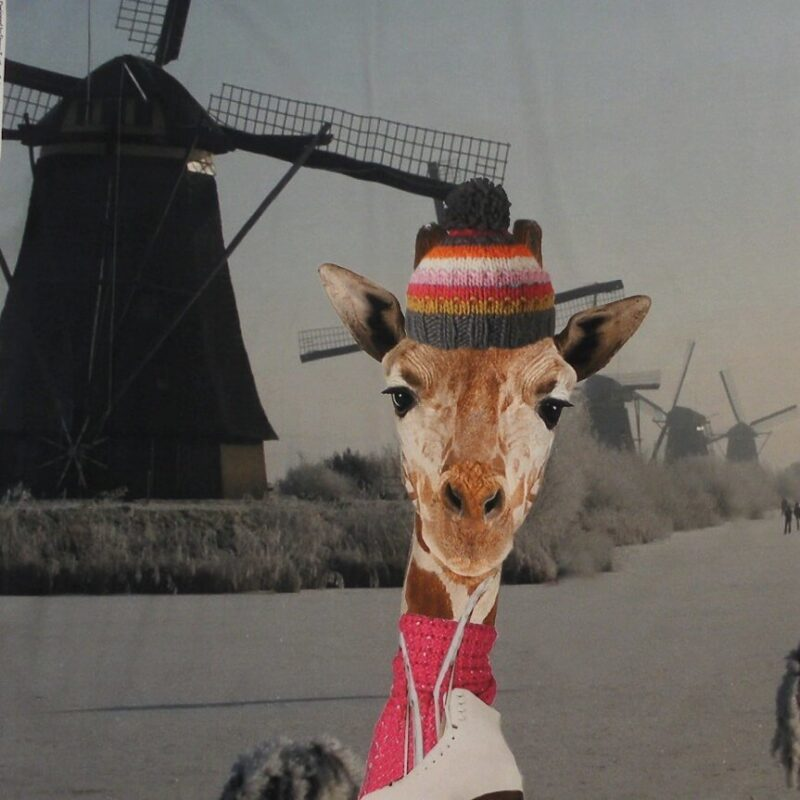 Giraf og mølle- Jersey rapport /20 -