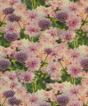 Blomster i lyserød og lilla - Jersey