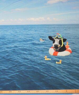 Dyr på dybt vand, jersey rapport -